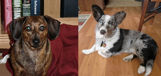 Meet Bella & Chilli Savenye.... very happy<br /><br /><br /> Medi-Paws Clients!